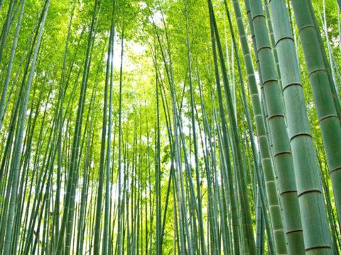 竹林整備と副産物の製造販売